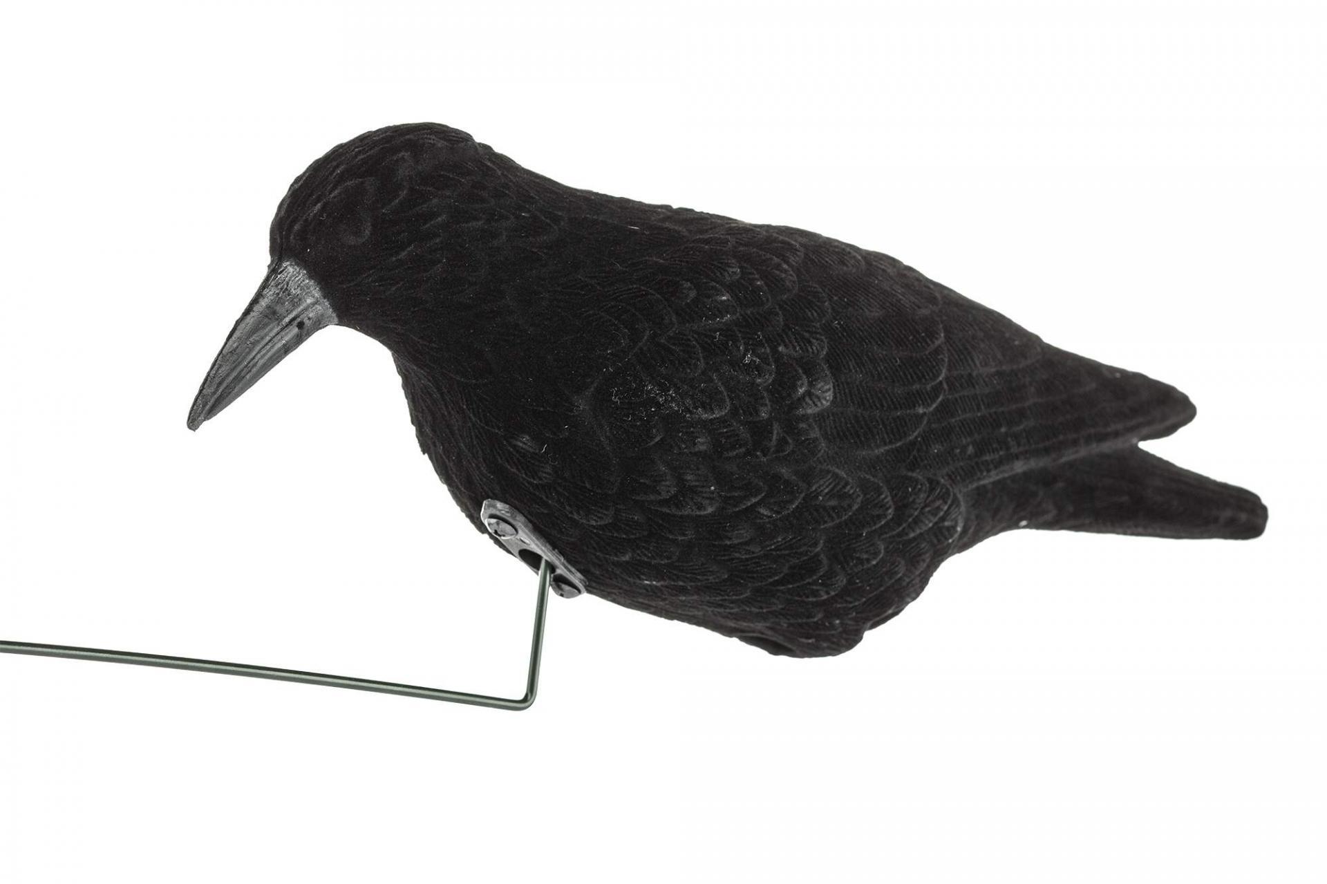Appelan electronique corbeaux