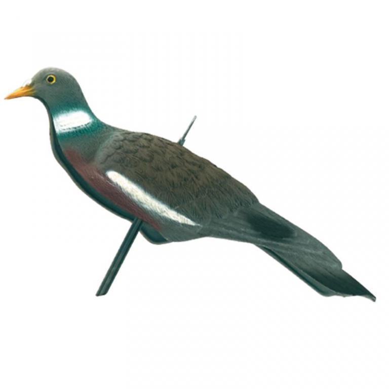 Appelant pigeon anglais