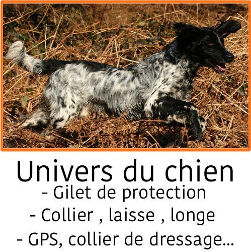 Chasseur et compagnie chien de chasse