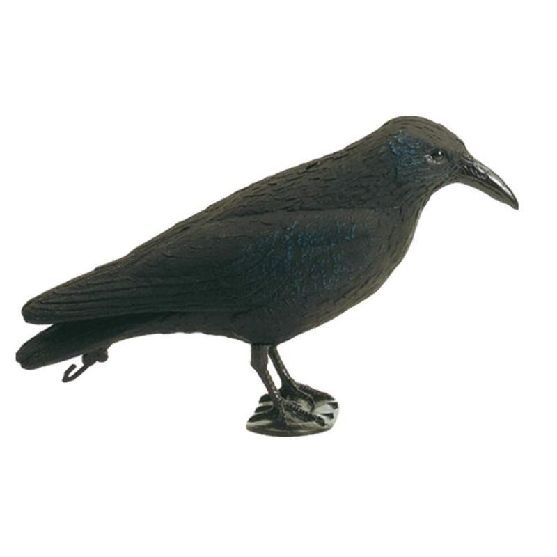 Appelant corbeau