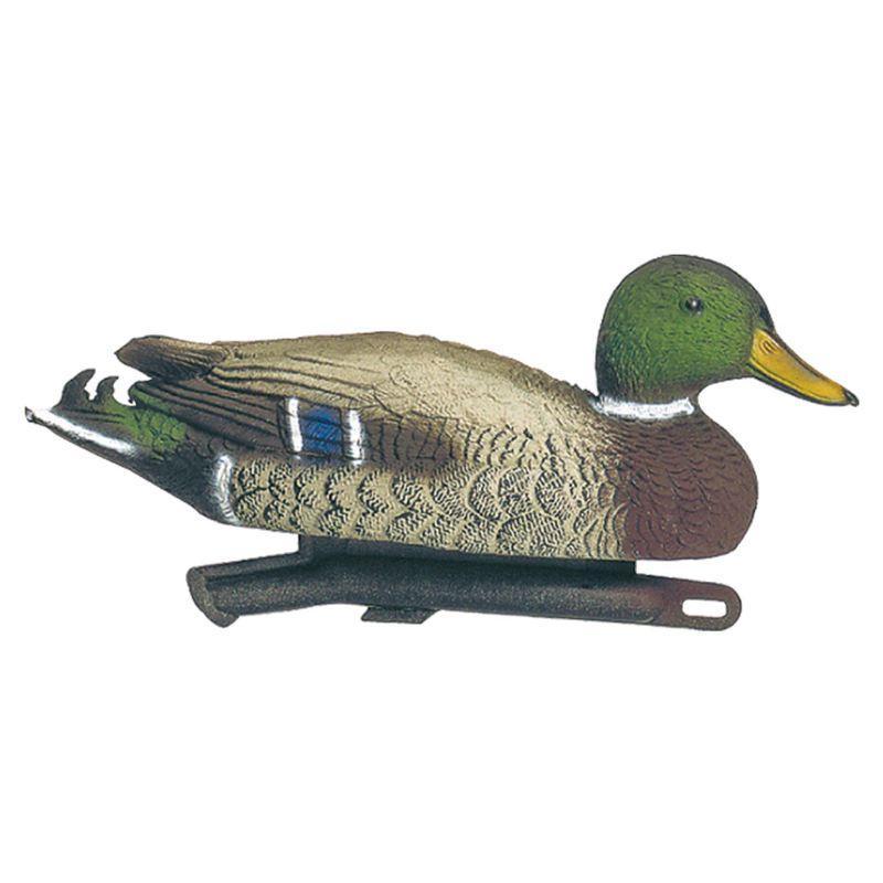 Appelant canard colvert mâle