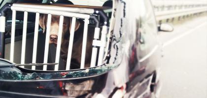 Autobench cage pour chien de coffre