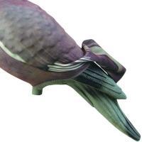 Chaussette appelant pigeon mieux que la peinture 1