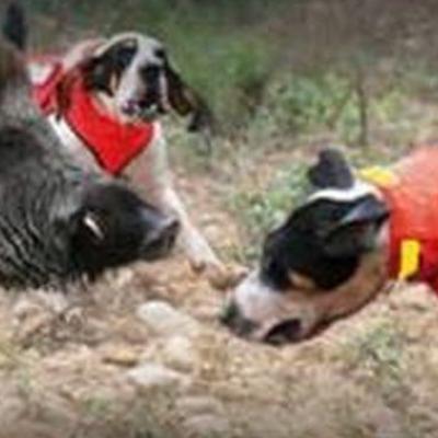 Comprendre la gamme de gilets pour chien browning