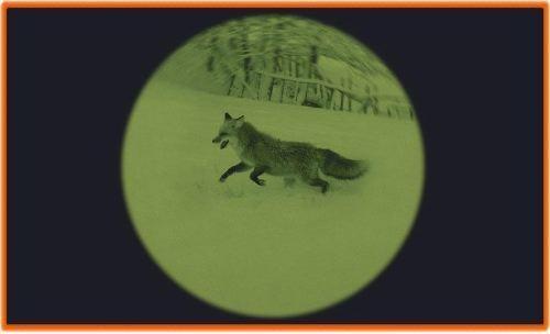 Optique vision nocturne chasseur et compagnie